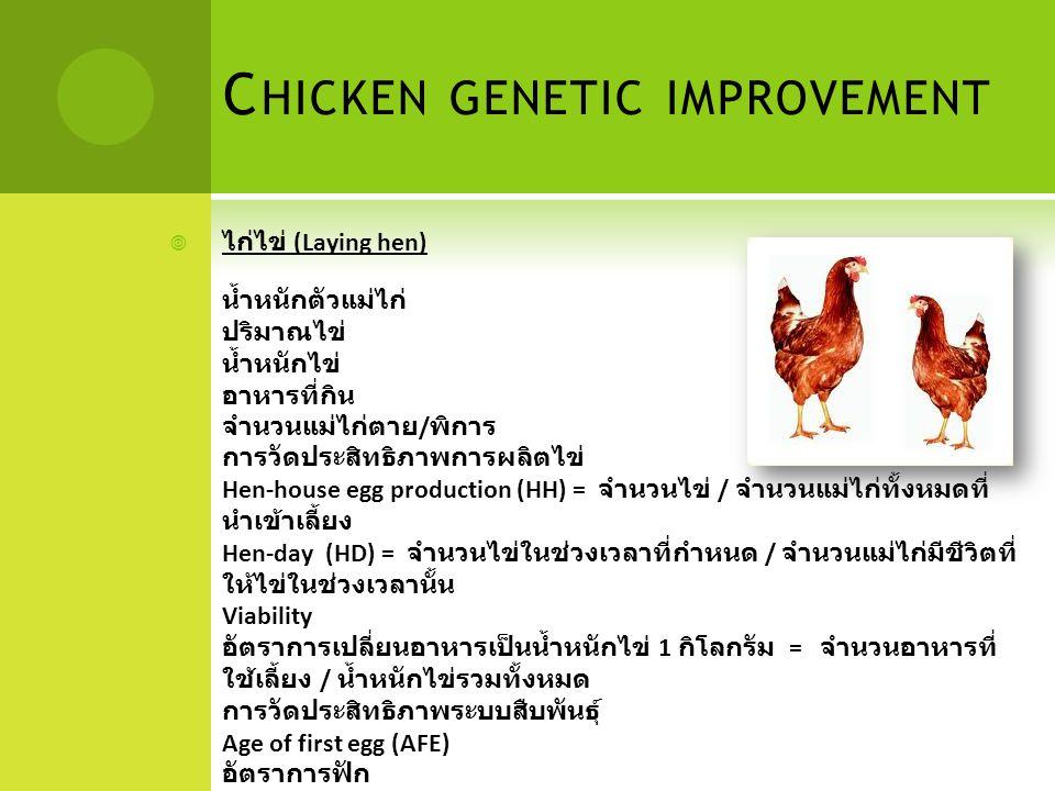 C HICKEN GENETIC IMPROVEMENT  ไก่ไข่ (Laying hen) น้ำหนักตัวแม่ไก่ ปริมาณไข่ น้ำหนักไข่ อาหารที่กิน จำนวนแม่ไก่ตาย / พิการ การวัดประสิทธิภาพการผลิตไข