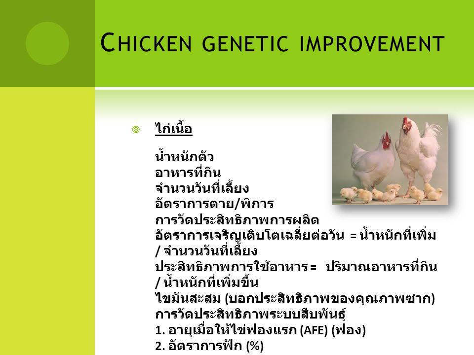C HICKEN GENETIC IMPROVEMENT  ไก่เนื้อ น้ำหนักตัว อาหารที่กิน จำนวนวันที่เลี้ยง อัตราการตาย / พิการ การวัดประสิทธิภาพการผลิต อัตราการเจริญเติบโตเฉลี่