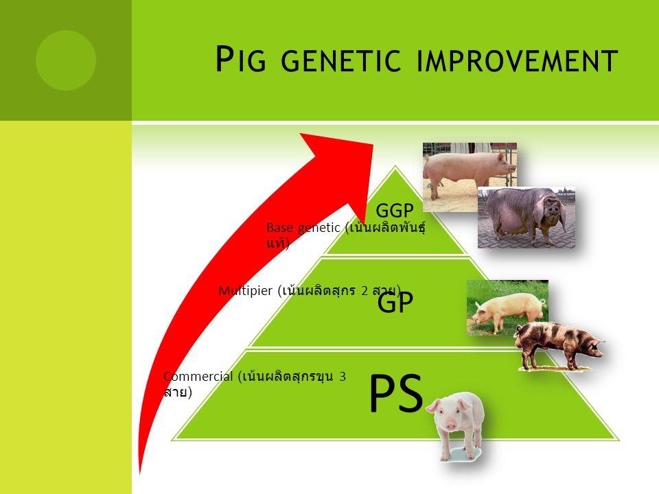 P IG GENETIC IMPROVEMENT  สุกรเพศผู้ อัตราการเจริญเติบโตเฉลี่ยต่อวัน = น้ำหนักที่เพิ่มขึ้น ( กรัม ) / จำนวนวันที่เลี้ยง ประสิทธิภาพการใช้อาหาร = ปริมาณอาหารที่กิน ( กก.) / น้ำหนักที่เพิ่มขึ้น ( กก.) ความหนาไขมันสันหลัง พื้นที่หน้าตัดเนื้อสัน การลดกลิ่น ไส้เลื่อน - ทองแดง  สุกรสาว อายุเมื่อแม่สุกรเป็นสัดครั้งแรก ( วัน ) อายุเมื่อแม่สุกรผสมพันธุ์ครั้งแรก ( วัน ) จำนวนวันผสมพันธุ์ครั้งแรก ถึง ผสมติด ( สุกรสาว ) อายุเมื่อแม่สุกรให้ลูกครอกแรก