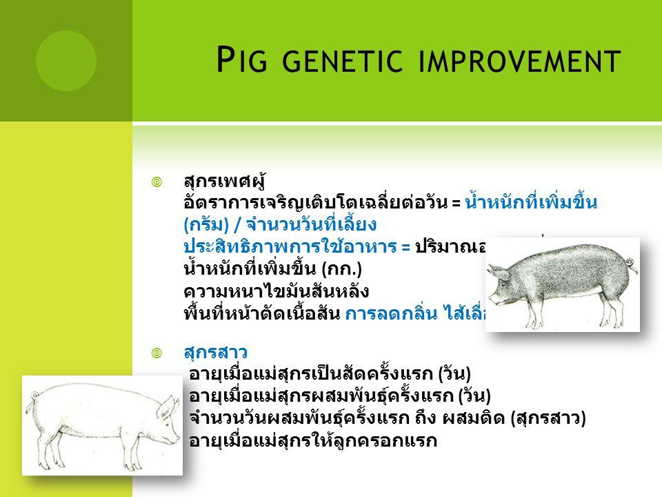 P IG GENETIC IMPROVEMENT  สุกรเพศผู้ อัตราการเจริญเติบโตเฉลี่ยต่อวัน = น้ำหนักที่เพิ่มขึ้น ( กรัม ) / จำนวนวันที่เลี้ยง ประสิทธิภาพการใช้อาหาร = ปริม