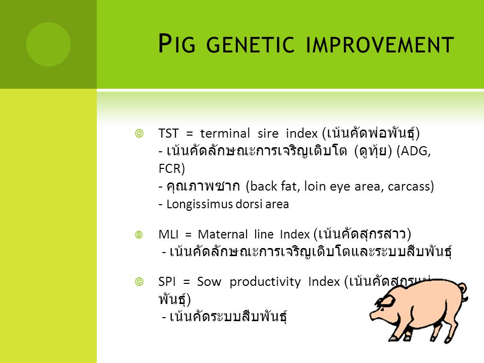 P IG GENETIC IMPROVEMENT  TST = terminal sire index ( เน้นคัดพ่อพันธุ์ ) - เน้นคัดลักษณะการเจริญเติบโต ( ดูทุ้ย ) (ADG, FCR) - คุณภาพซาก (back fat, l