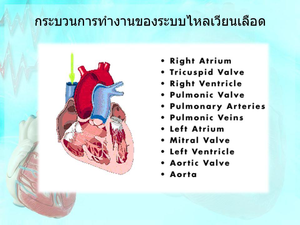 กระบวนการทำงานของระบบไหลเวียนเลือด