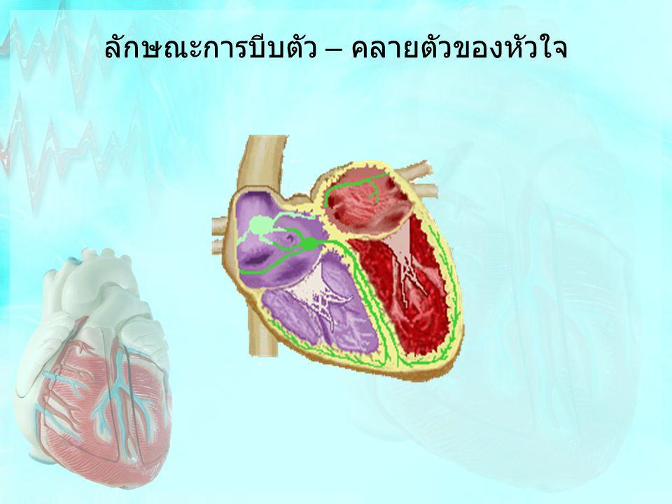 ลักษณะการบีบตัว – คลายตัวของหัวใจ