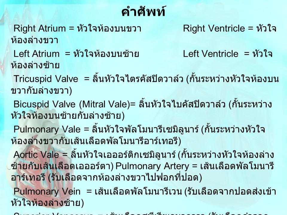 คำศัพท์ Right Atrium = หัวใจห้องบนขวา Right Ventricle = หัวใจ ห้องล่างขวา Left Atrium = หัวใจห้องบนซ้าย Left Ventricle = หัวใจ ห้องล่างซ้าย Tricuspid
