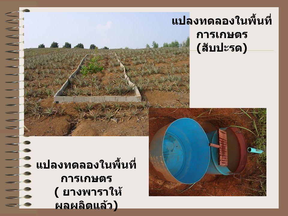 แปลงทดลองในพื้นที่ การเกษตร ( ยางพาราให้ ผลผลิตแล้ว ) แปลงทดลองในพื้นที่ การเกษตร ( สับปะรด )