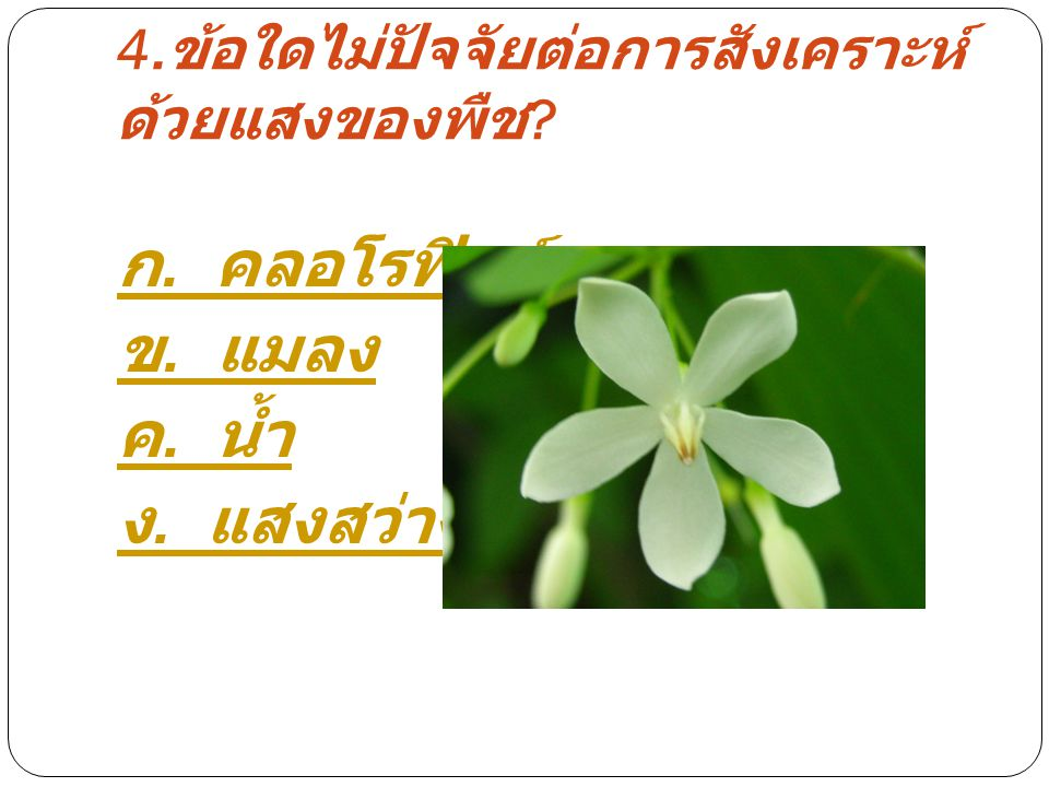 4. ข้อใดไม่ปัจจัยต่อการสังเคราะห์ ด้วยแสงของพืช ? ก. คลอโรฟิลล์ ข. แมลง ค. น้ำ ง. แสงสว่าง