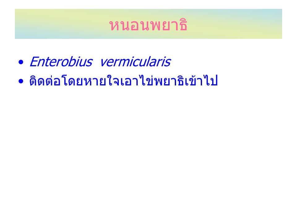 หนอนพยาธิ Enterobius vermicularis ติดต่อโดยหายใจเอาไข่พยาธิเข้าไป