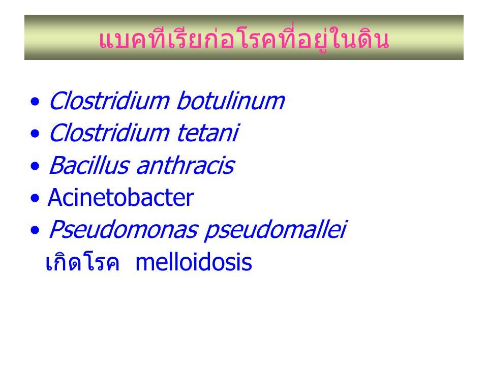 แบคทีเรียก่อโรคที่อยู่ในดิน Clostridium botulinum Clostridium tetani Bacillus anthracis Acinetobacter Pseudomonas pseudomallei เกิดโรค melloidosis