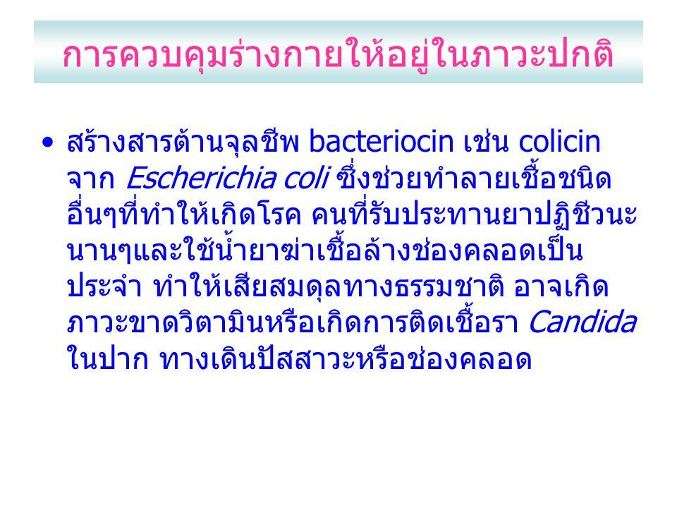การควบคุมร่างกายให้อยู่ในภาวะปกติ สร้างสารต้านจุลชีพ bacteriocin เช่น colicin จาก Escherichia coli ซึ่งช่วยทำลายเชื้อชนิด อื่นๆที่ทำให้เกิดโรค คนที่รับประทานยาปฏิชีวนะ นานๆและใช้น้ำยาฆ่าเชื้อล้างช่องคลอดเป็น ประจำ ทำให้เสียสมดุลทางธรรมชาติ อาจเกิด ภาวะขาดวิตามินหรือเกิดการติดเชื้อรา Candida ในปาก ทางเดินปัสสาวะหรือช่องคลอด