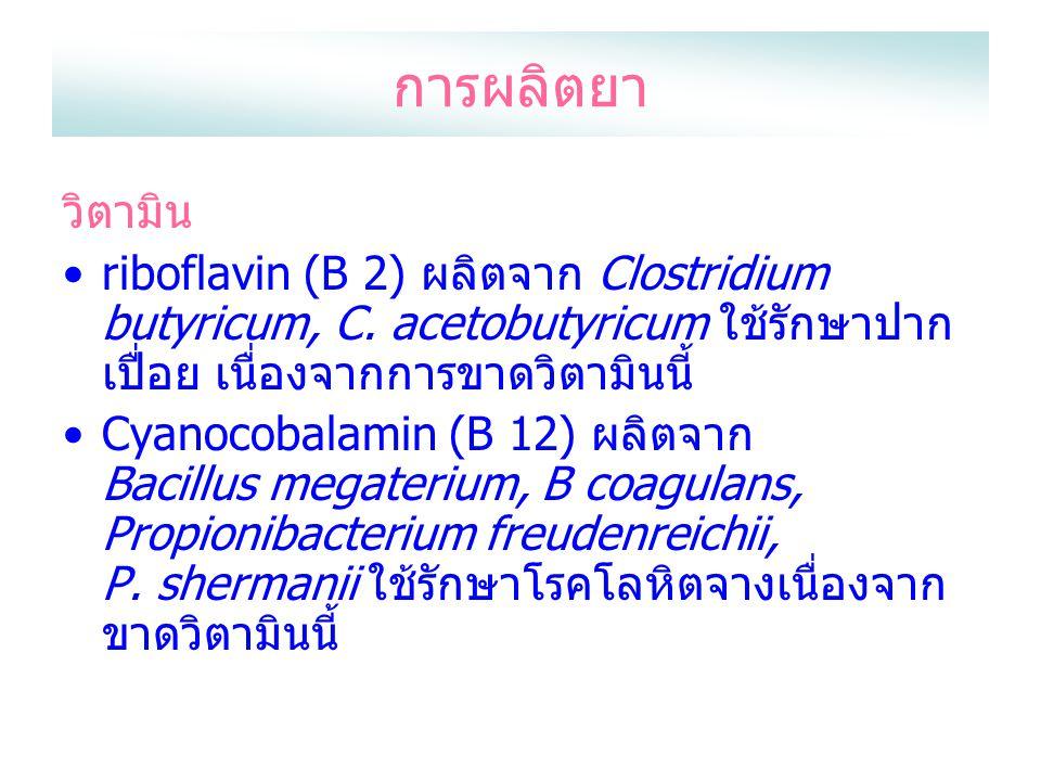 การผลิตยา วิตามิน riboflavin (B 2) ผลิตจาก Clostridium butyricum, C. acetobutyricum ใช้รักษาปาก เปื่อย เนื่องจากการขาดวิตามินนี้ Cyanocobalamin (B 12)