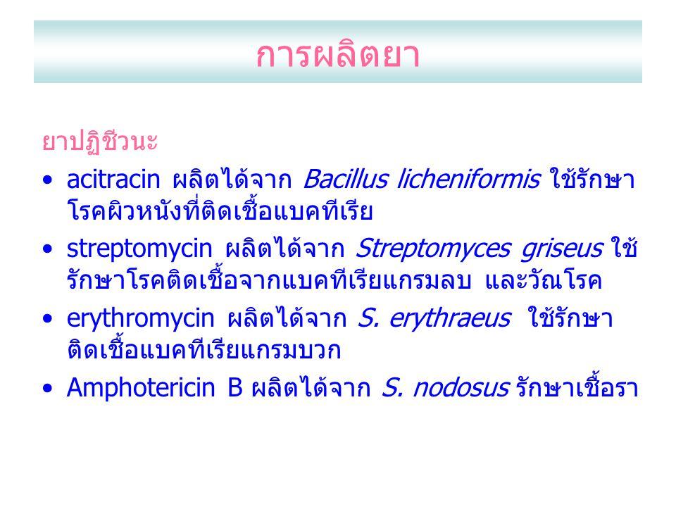 การผลิตยา ยาปฏิชีวนะ acitracin ผลิตได้จาก Bacillus licheniformis ใช้รักษา โรคผิวหนังที่ติดเชื้อแบคทีเรีย streptomycin ผลิตได้จาก Streptomyces griseus