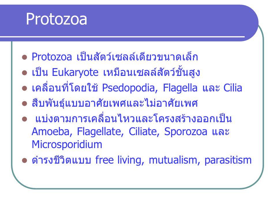 การติดต่อ E. histolytica กิน Cyst ระยะ 4 นิวเคลียส