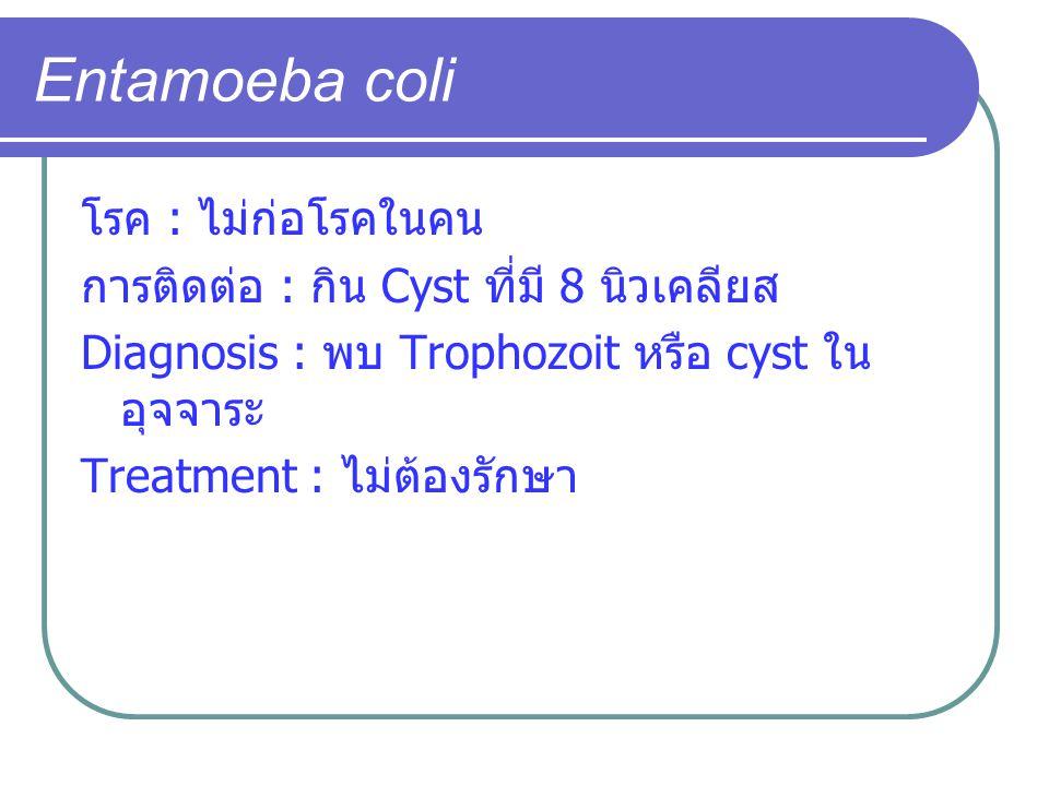 Entamoeba coli โรค : ไม่ก่อโรคในคน การติดต่อ : กิน Cyst ที่มี 8 นิวเคลียส Diagnosis : พบ Trophozoit หรือ cyst ใน อุจจาระ Treatment : ไม่ต้องรักษา