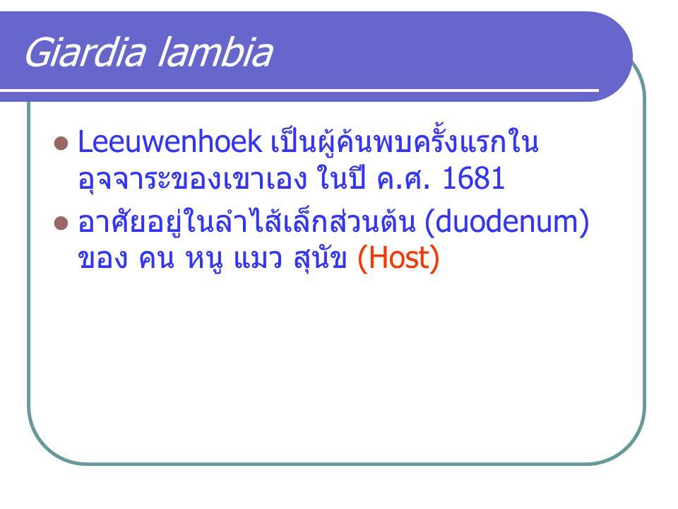 Giardia lambia Leeuwenhoek เป็นผู้ค้นพบครั้งแรกใน อุจจาระของเขาเอง ในปี ค.ศ. 1681 อาศัยอยู่ในลำไส้เล็กส่วนต้น (duodenum) ของ คน หนู แมว สุนัข (Host)
