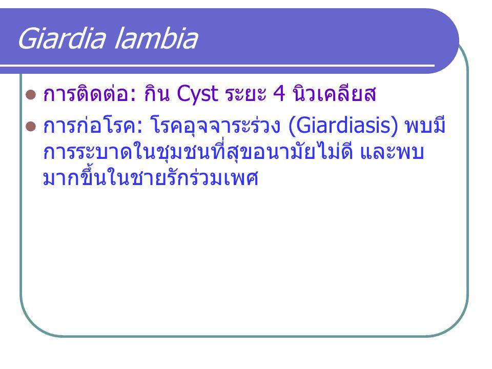 Giardia lambia การติดต่อ: กิน Cyst ระยะ 4 นิวเคลียส การก่อโรค: โรคอุจจาระร่วง (Giardiasis) พบมี การระบาดในชุมชนที่สุขอนามัยไม่ดี และพบ มากขึ้นในชายรัก