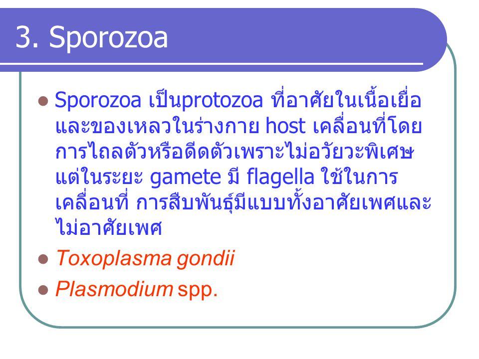3. Sporozoa Sporozoa เป็นprotozoa ที่อาศัยในเนื้อเยื่อ และของเหลวในร่างกาย host เคลื่อนที่โดย การไถลตัวหรือดีดตัวเพราะไม่อวัยวะพิเศษ แต่ในระยะ gamete