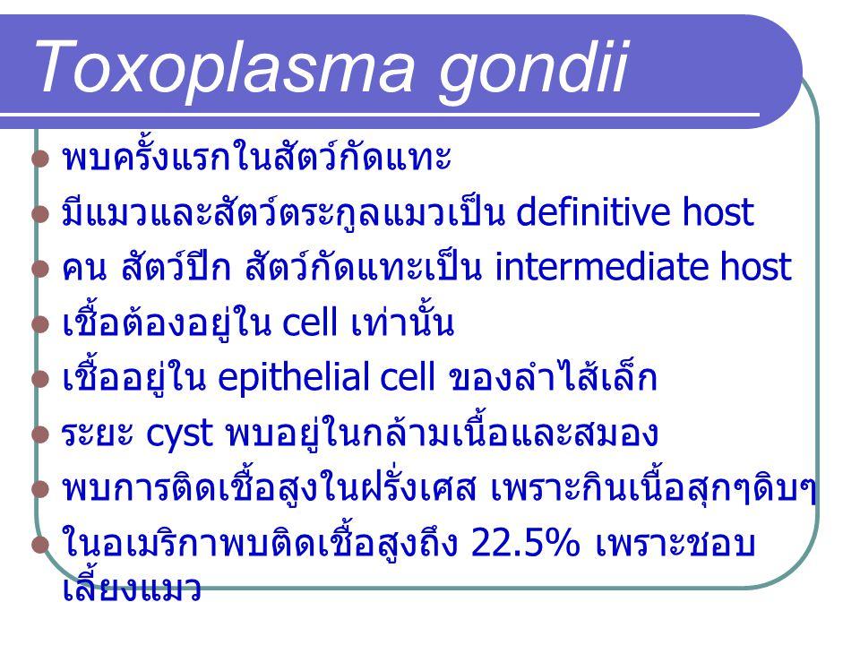 Toxoplasma gondii พบครั้งแรกในสัตว์กัดแทะ มีแมวและสัตว์ตระกูลแมวเป็น definitive host คน สัตว์ปีก สัตว์กัดแทะเป็น intermediate host เชื้อต้องอยู่ใน cel