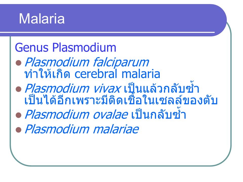 Malaria Genus Plasmodium Plasmodium falciparum ทำให้เกิด cerebral malaria Plasmodium vivax เป็นแล้วกลับซ้ำ เป็นได้อีกเพราะมีติดเชื้อในเซลล์ของตับ Plas