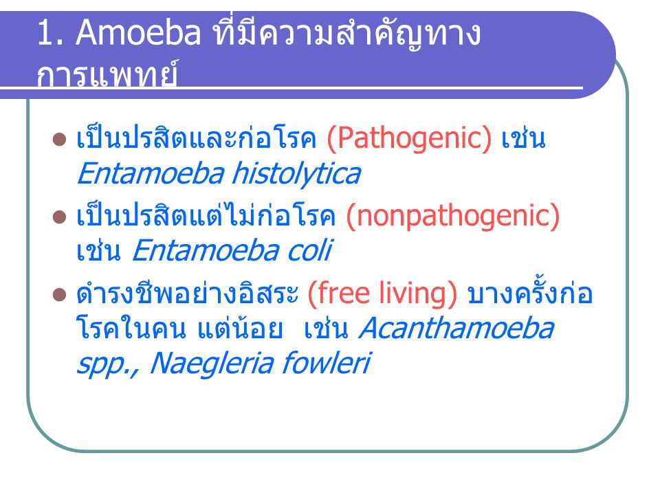 1. Amoeba ที่มีความสำคัญทาง การแพทย์ เป็นปรสิตและก่อโรค (Pathogenic) เช่น Entamoeba histolytica เป็นปรสิตแต่ไม่ก่อโรค (nonpathogenic) เช่น Entamoeba c