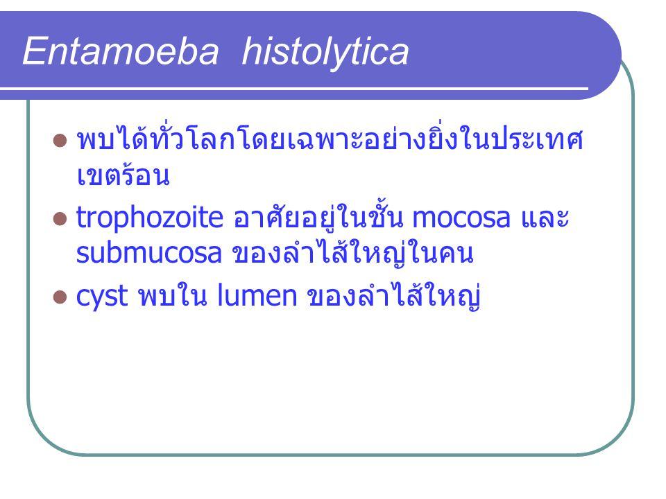 Entamoeba histolytica พบได้ทั่วโลกโดยเฉพาะอย่างยิ่งในประเทศ เขตร้อน trophozoite อาศัยอยู่ในชั้น mocosa และ submucosa ของลำไส้ใหญ่ในคน cyst พบใน lumen