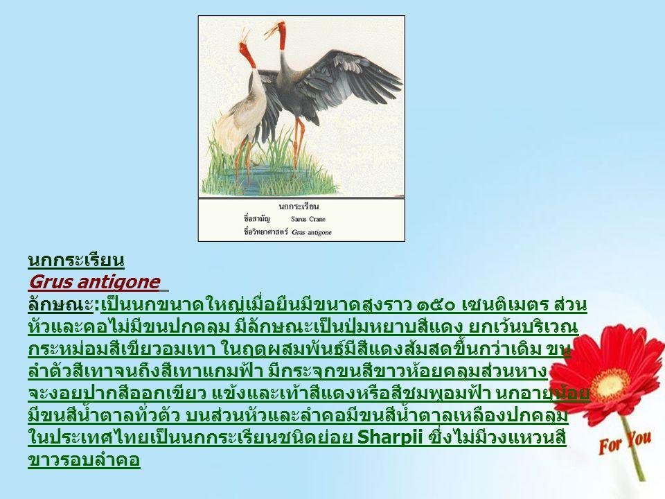 นกกระเรียน Grus antigone ลักษณะ:เป็นนกขนาดใหญ่เมื่อยืนมีขนาดสูงราว ๑๕๐ เซนติเมตร ส่วน หัวและคอไม่มีขนปกคลุม มีลักษณะเป็นปุ่มหยาบสีแดง ยกเว้นบริเวณ กระ