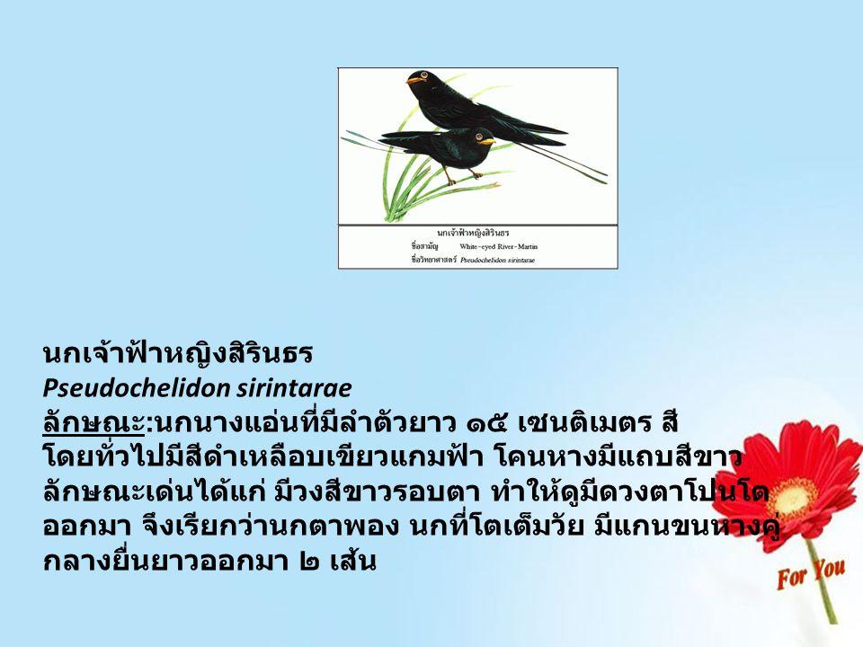 นกเจ้าฟ้าหญิงสิรินธร Pseudochelidon sirintarae ลักษณะ : นกนางแอ่นที่มีลำตัวยาว ๑๕ เซนติเมตร สี โดยทั่วไปมีสีดำเหลือบเขียวแกมฟ้า โคนหางมีแถบสีขาว ลักษณ