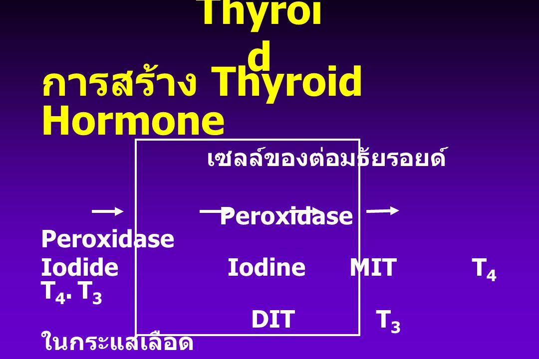 Thyroi d การสร้าง Thyroid Hormone เซลล์ของต่อมธัยรอยด์ Peroxidase Peroxidase Iodide Iodine MITT 4 T 4. T 3 DITT 3 ในกระแสเลือด + Thyroglobulin