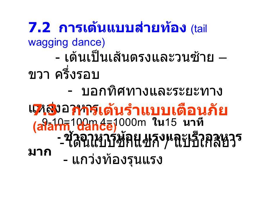 7.2 การเต้นแบบส่ายท้อง (tail wagging dance) - เต้นเป็นเส้นตรงและวนซ้าย – ขวา ครึ่งรอบ - บอกทิศทางและระยะทาง แหล่งอาหาร 9-10=100m 4=1000m ใน 15 นาที - ช้าอาหารน้อย แรงและเร็วอาหาร มาก 7.3 การเต้นรำแบบเตือนภัย (alarm dance ) - เต้นแบบซิกแซก / แบบเกลียว - แกว่งท้องรุนแรง