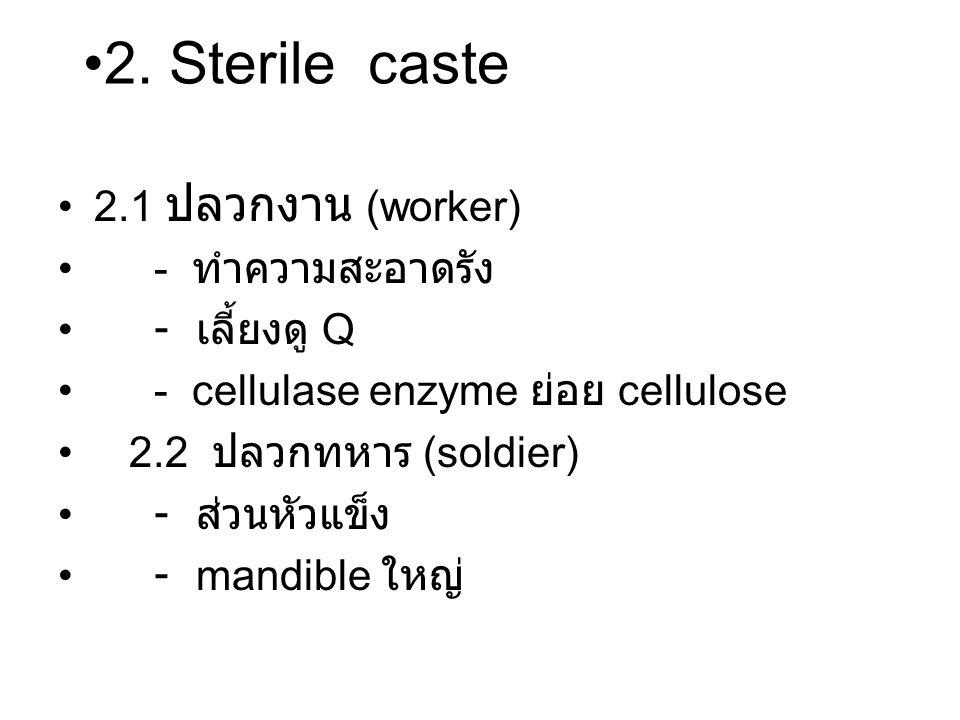 2.1 ปลวกงาน (worker) - ทำความสะอาดรัง - เลี้ยงดู Q - cellulase enzyme ย่อย cellulose 2.2 ปลวกทหาร (soldier) - ส่วนหัวแข็ง - mandible ใหญ่ 2.