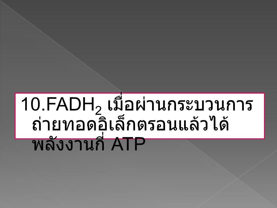 10.FADH 2 เมื่อผ่านกระบวนการ ถ่ายทอดอิเล็กตรอนแล้วได้ พลังงานกี่ ATP