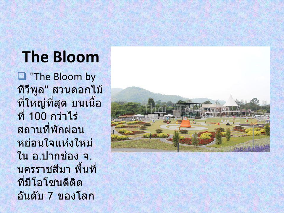 The Bloom  The Bloom by ทีวีพูล สวนดอกไม้ ที่ใหญ่ที่สุด บนเนื้อ ที่ 100 กว่าไร่ สถานที่พักผ่อน หย่อนใจแห่งใหม่ ใน อ.