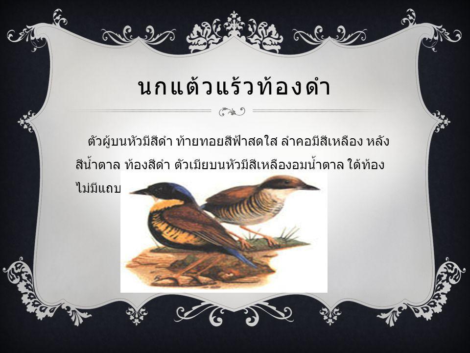 นกแต้วแร้วท้องดำ ตัวผู้บนหัวมีสีดำ ท้ายทอยสีฟ้าสดใส ลำคอมีสีเหลือง หลัง สีน้ำตาล ท้องสีดำ ตัวเมียบนหัวมีสีเหลืองอมน้ำตาล ใต้ท้อง ไม่มีแถบดำทำรังอยู่ตามกอหวายหรือกอระกำ