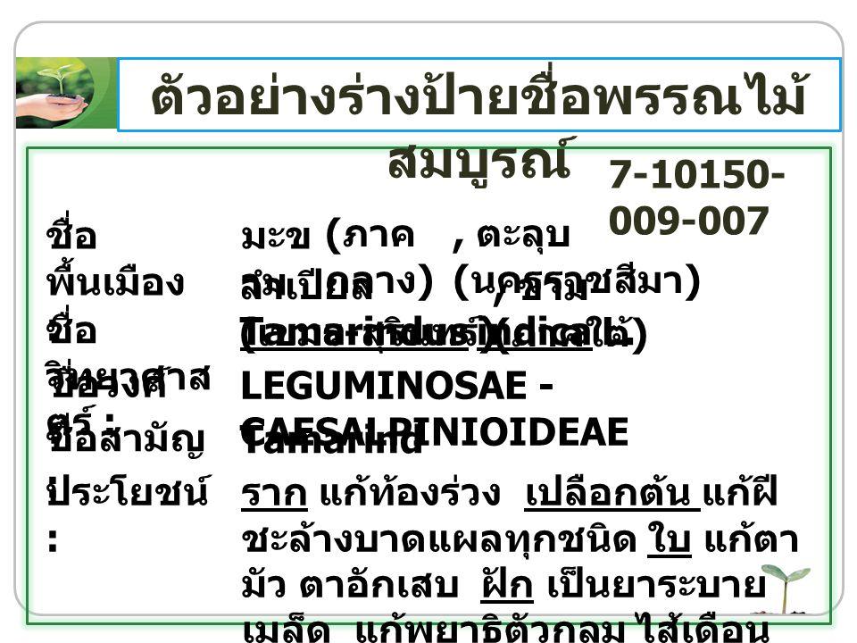 ชื่อ พื้นเมือง : ชื่อ วิทยาศาส ตร์ : ชื่อวงศ์ : ชื่อสามัญ : ประโยชน์ : มะข าม Tamarindus indica L. LEGUMINOSAE - CAESALPINIOIDEAE Tamarind ราก แก้ท้อง