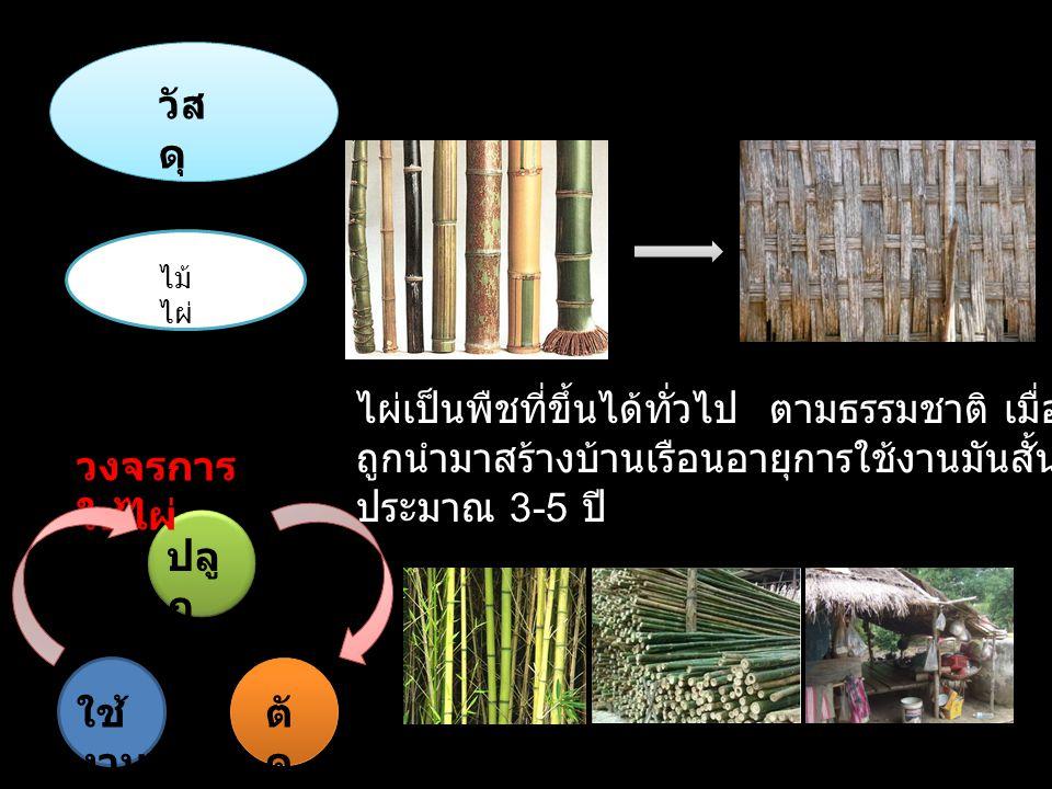 วัส ดุ ไม้ ไผ่ ไผ่เป็นพืชที่ขึ้นได้ทั่วไป ตามธรรมชาติ เมื่อ ถูกนำมาสร้างบ้านเรือนอายุการใช้งานมันสั้น ประมาณ 3-5 ปี วงจรการ ใช้ไผ่ ปลู ก ตั ด ใช้ งาน
