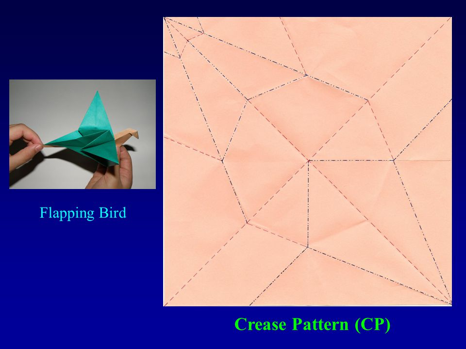 Crease Pattern (CP) Flapping Bird