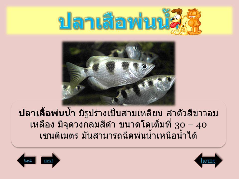 ปลาเสื้อพ่นน้ำ มีรูปร่างเป็นสามเหลียม ลำตัวสีขาวอม เหลือง มีจุดวงกลมสีดำ ขนาดโตเต็มที่ 30 – 40 เซนติเมตร มันสามารถฉีดพ่นน้ำเหนือน้ำได้ back next home