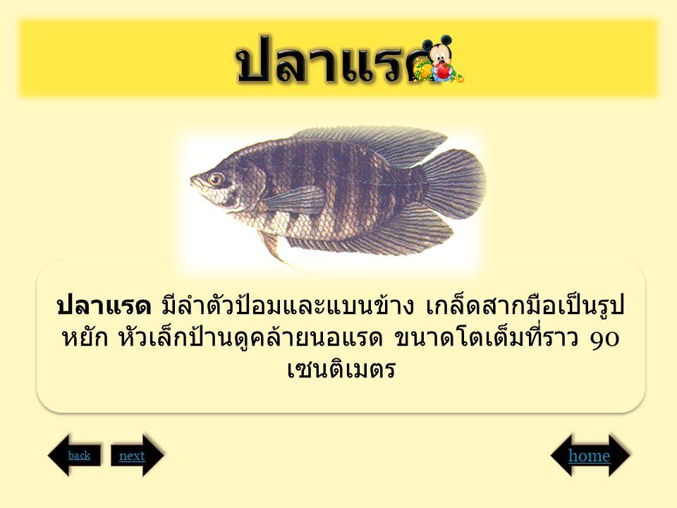 ปลาแรด มีลำตัวป้อมและแบนข้าง เกล็ดสากมือเป็นรูป หยัก หัวเล็กป้านดูคล้ายนอแรด ขนาดโตเต็มที่ราว 90 เซนติเมตร back next home