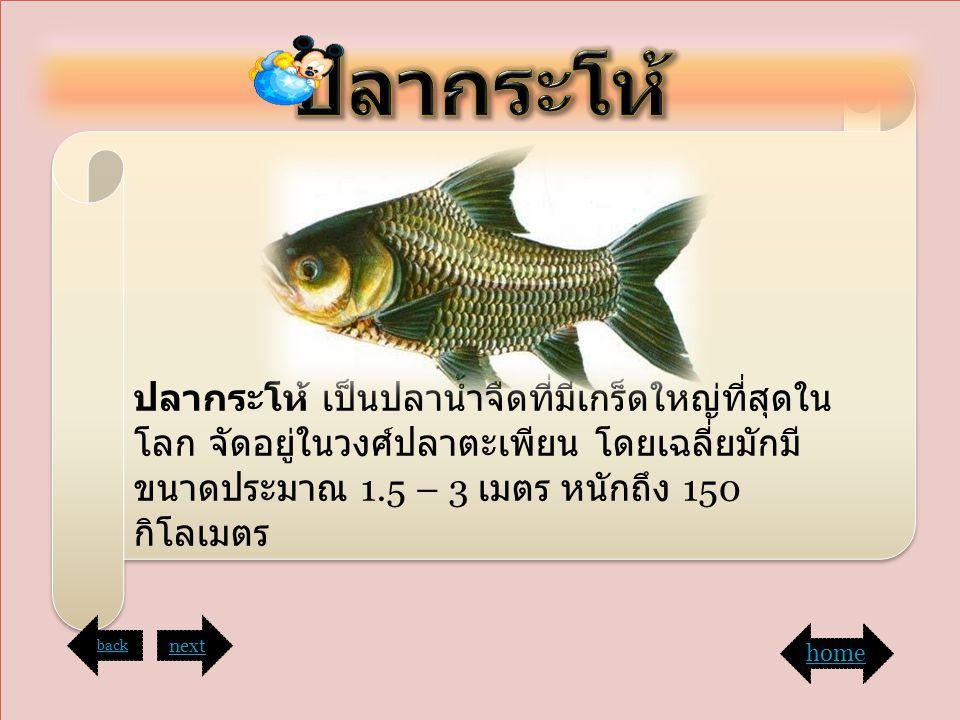 ฤ ฤ ปลากระโห้ เป็นปลาน้ำจืดที่มีเกร็ดใหญ่ที่สุดใน โลก จัดอยู่ในวงศ์ปลาตะเพียน โดยเฉลี่ยมักมี ขนาดประมาณ 1.5 – 3 เมตร หนักถึง 150 กิโลเมตร back next ho