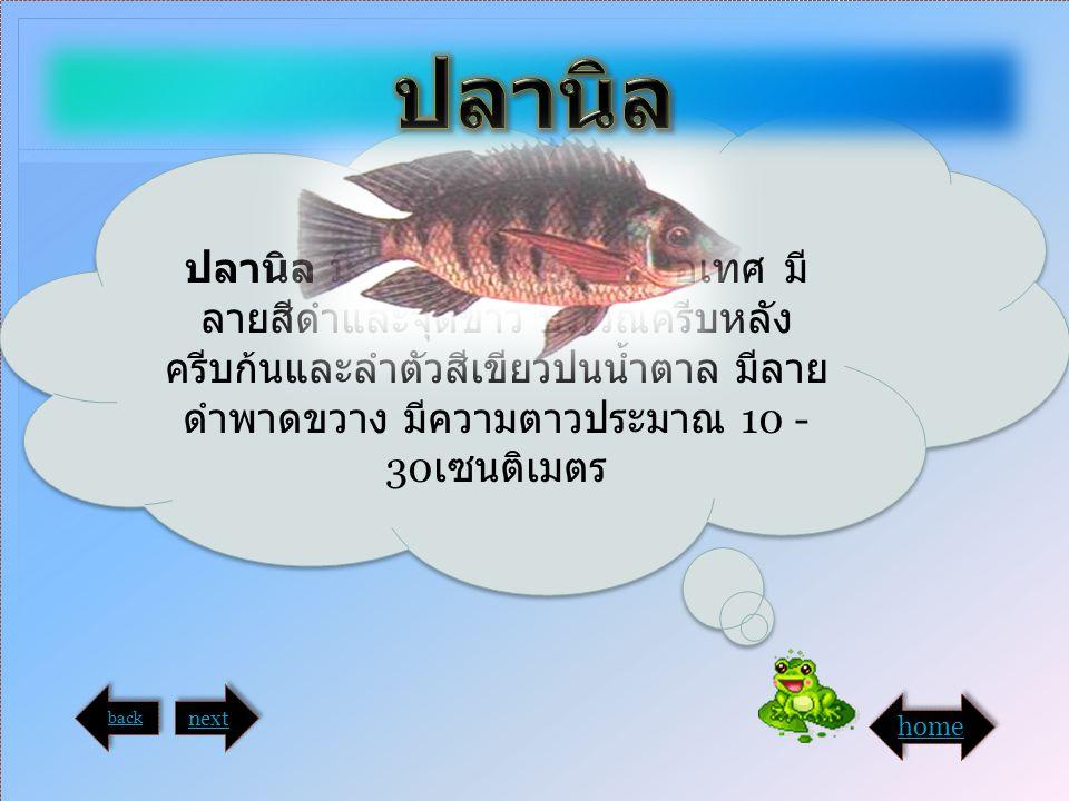 ปลานิล มีรูปร่างคล้ายปลาหมอเทศ มี ลายสีดำและจุดขาว บริเวณครีบหลัง ครีบก้นและลำตัวสีเขียวปนน้ำตาล มีลาย ดำพาดขวาง มีความตาวประมาณ 10 - 30 เซนติเมตร bac
