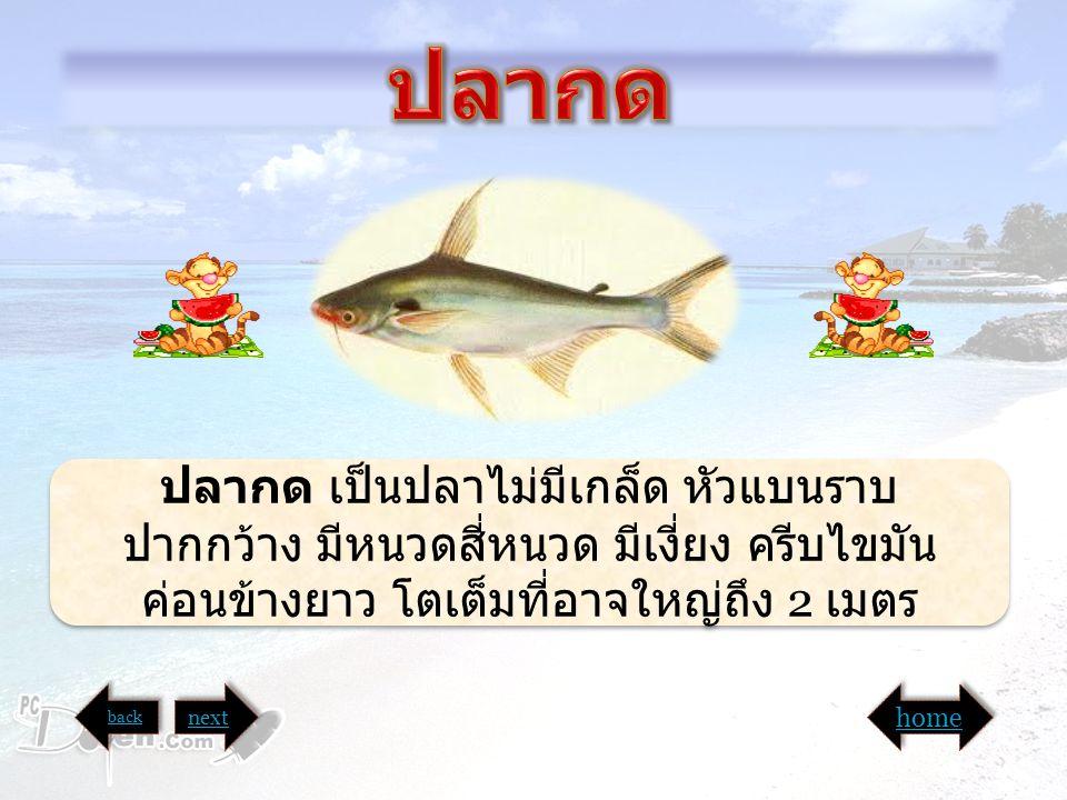 อ ปลากด เป็นปลาไม่มีเกล็ด หัวแบนราบ ปากกว้าง มีหนวดสี่หนวด มีเงี่ยง ครีบไขมัน ค่อนข้างยาว โตเต็มที่อาจใหญ่ถึง 2 เมตร back next home