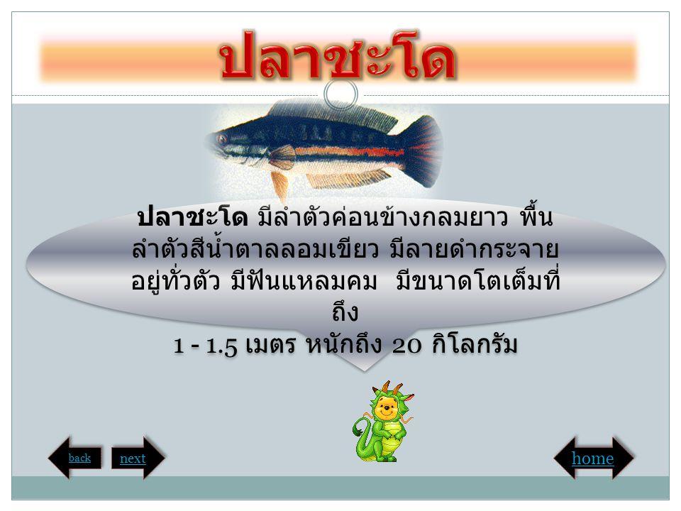 ปลาบึก เป็นปลาน้ำจืดที่ใหญ่ที่สุดใน ลุ่มน้ำโขง เป็นปลาไม่มีเกล็ด เกือบจะ ไม่มีหนวด สามารถได้ถึง 3 เมตร และ หนัก 150 – 200 กิโลกรัม ปลาบึก เป็นปลาน้ำจืดที่ใหญ่ที่สุดใน ลุ่มน้ำโขง เป็นปลาไม่มีเกล็ด เกือบจะ ไม่มีหนวด สามารถได้ถึง 3 เมตร และ หนัก 150 – 200 กิโลกรัม back next home