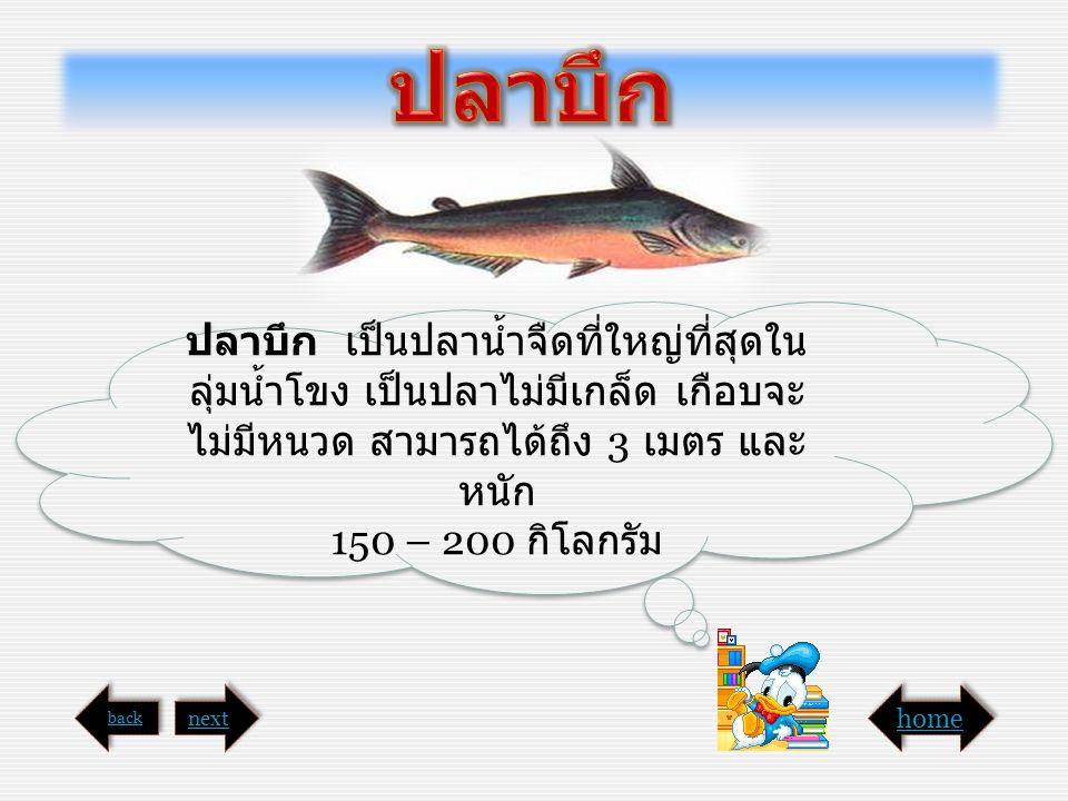 ปลาบึก เป็นปลาน้ำจืดที่ใหญ่ที่สุดใน ลุ่มน้ำโขง เป็นปลาไม่มีเกล็ด เกือบจะ ไม่มีหนวด สามารถได้ถึง 3 เมตร และ หนัก 150 – 200 กิโลกรัม ปลาบึก เป็นปลาน้ำจื