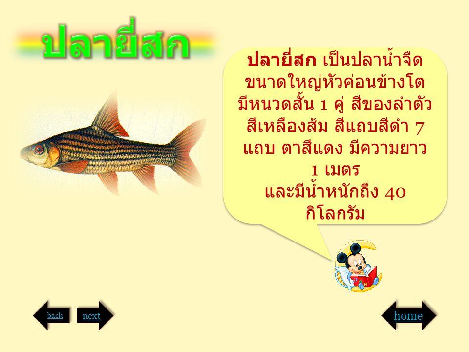 ปลายี่สก เป็นปลาน้ำจืด ขนาดใหญ่หัวค่อนข้างโต มีหนวดสั้น 1 คู่ สีของลำตัว สีเหลืองส้ม สีแถบสีดำ 7 แถบ ตาสีแดง มีความยาว 1 เมตร และมีน้ำหนักถึง 40 กิโลก