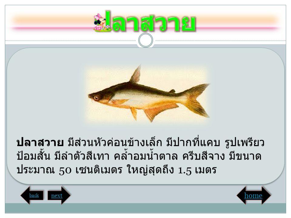 ปลาสวาย มีส่วนหัวค่อนข้างเล็ก มีปากที่แคบ รูปเพรียว ป้อมสั้น มีลำตัวสีเทา คล้ำอมน้ำตาล ครีบสีจาง มีขนาด ประมาณ 50 เซนติเมตร ใหญ่สุดถึง 1.5 เมตร back n