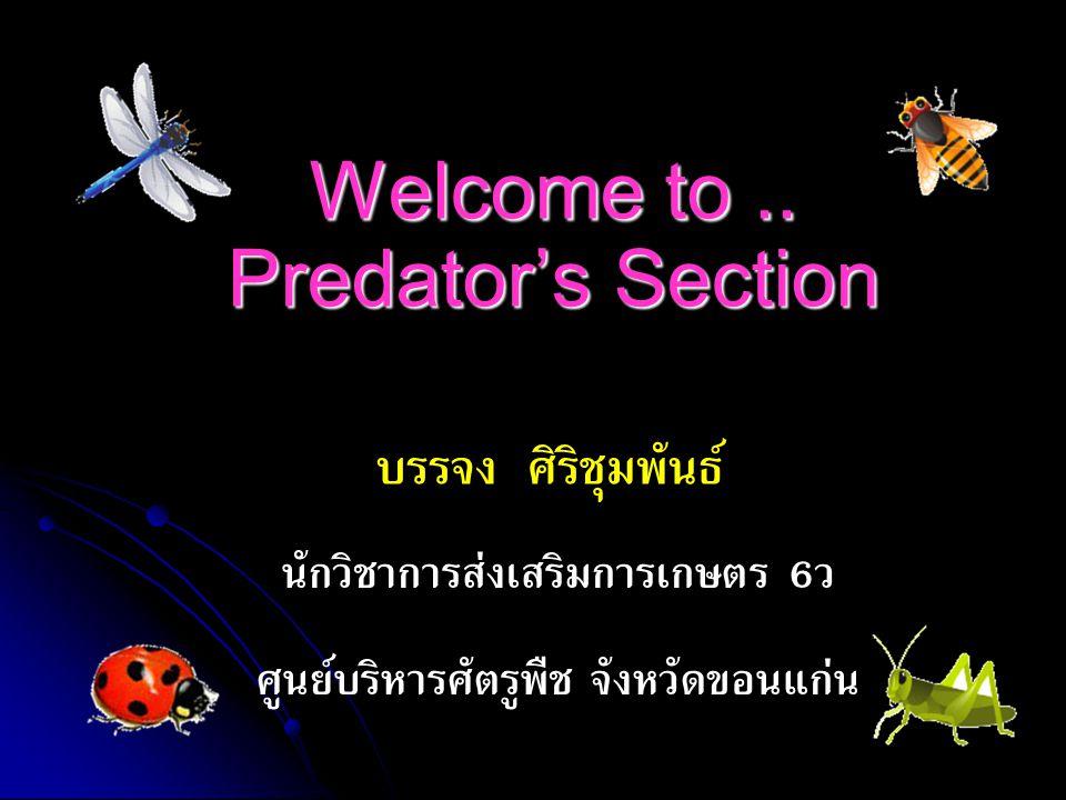 Welcome to.. Predator's Section บรรจง ศิริชุมพันธ์ นักวิชาการส่งเสริมการเกษตร 6ว ศูนย์บริหารศัตรูพืช จังหวัดขอนแก่น