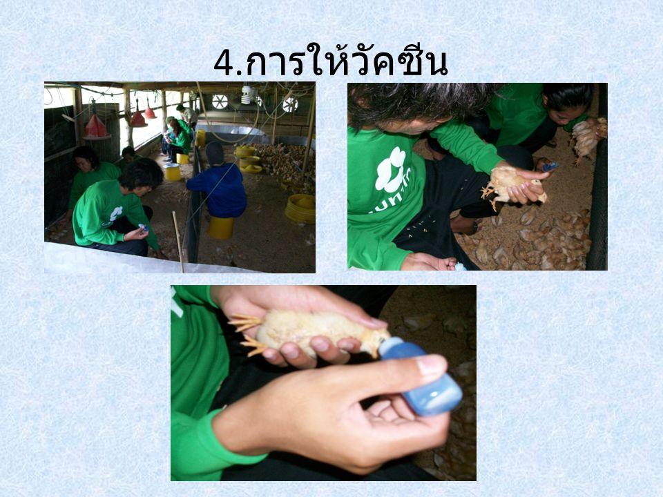 4. การให้วัคซีน