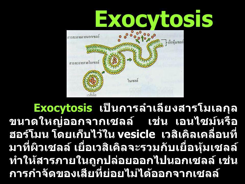 สารที่มีโมเลกุลขนาดใหญ่ เช่น โปรตีน และ คาร์โบไฮเครต ผ่านออกนอกเซลล์ด้วยกระบวนการ exocytosis และเข้าไปในเซลล์ด้วย กระบวนการ endocytosis Exocytosis and