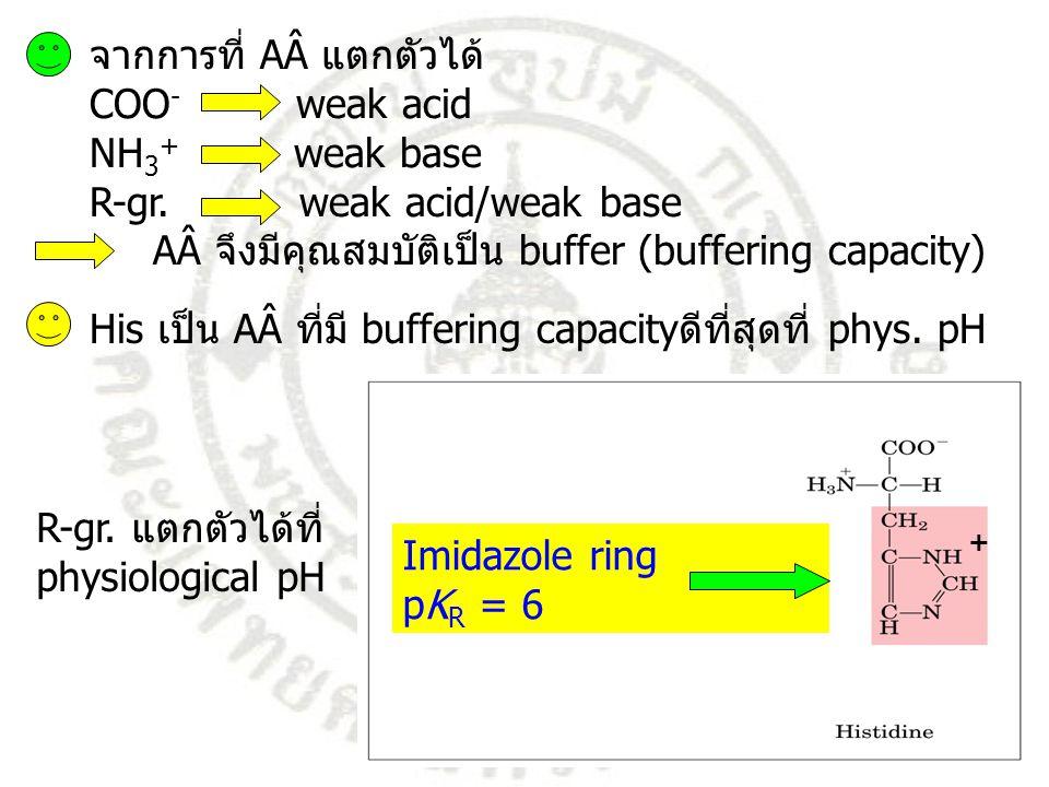 จากการที่ AÂ แตกตัวได้ COO - weak acid NH 3 + weak base R-gr.weak acid/weak base AÂ จึงมีคุณสมบัติเป็น buffer (buffering capacity) His เป็น AÂ ที่มี b