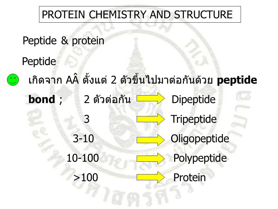 เกิดจาก AÂ ตั้งแต่ 2 ตัวขึ้นไปมาต่อกันด้วย peptide bond ;2 ตัวต่อกัน Dipeptide 3 Tripeptide 3-10 Oligopeptide 10-100 Polypeptide >100 Protein Peptide