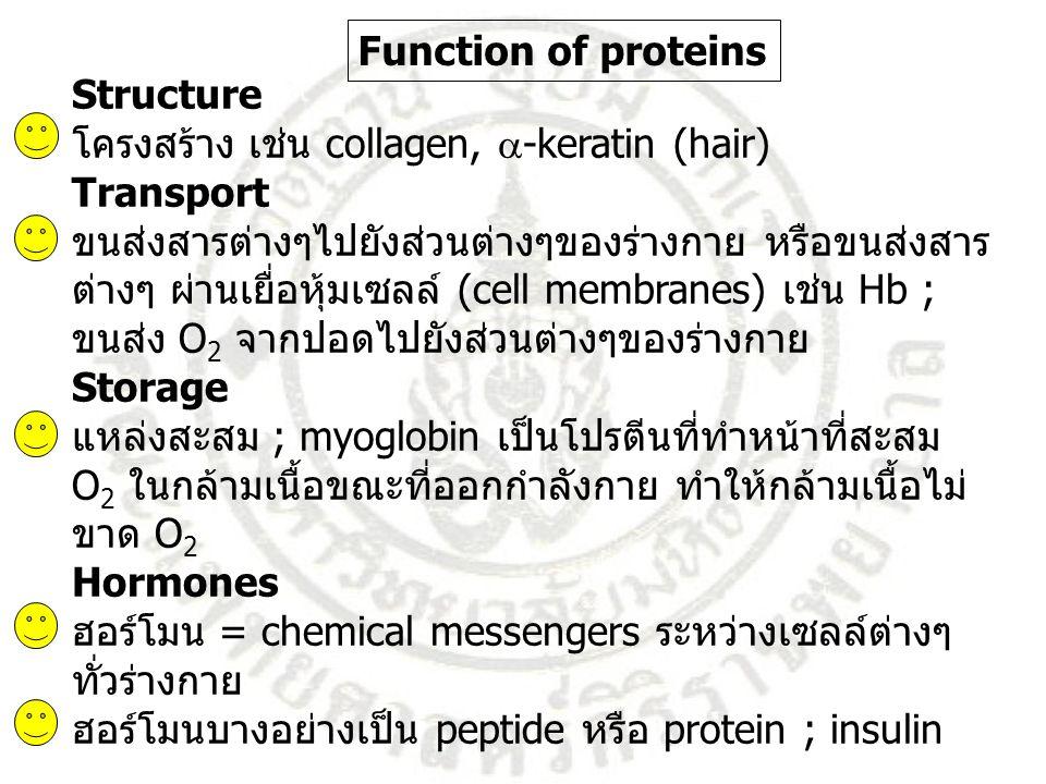 Structure โครงสร้าง เช่น collagen,  -keratin (hair) Transport ขนส่งสารต่างๆไปยังส่วนต่างๆของร่างกาย หรือขนส่งสาร ต่างๆ ผ่านเยื่อหุ้มเซลล์ (cell membr